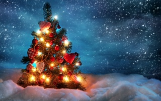 Christmas tree outside wallpapers and stock photos