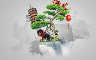 Bonsai wallpapers and stock photos