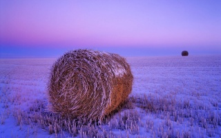 Winter Field wallpapers and stock photos