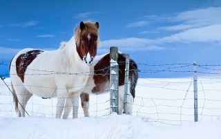 Horses in the Snow wallpapers and stock photos