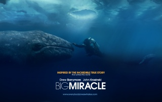 Big Miracle wallpapers and stock photos