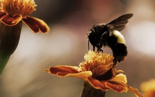 Busy Bee wallpapers and stock photos
