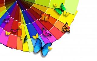 Colorful Butterflies wallpapers and stock photos
