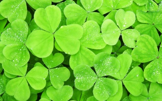 Lots of clover leaf wallpapers and stock photos