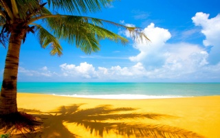 Beach and Palm wallpapers and stock photos