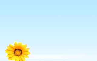 Summer flower wallpapers and stock photos