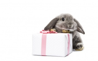 Bunny and present wallpapers and stock photos