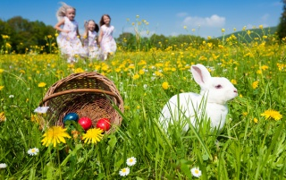 Eggs, rabbit and kids wallpapers and stock photos