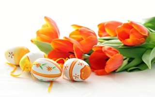 Eggs and red tulips wallpapers and stock photos