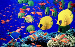 Life below red sea wallpapers and stock photos