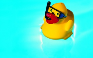 Little Rubber Duck wallpapers and stock photos