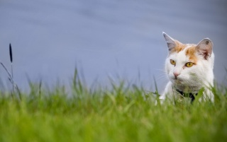 Cat in the Grass wallpapers and stock photos