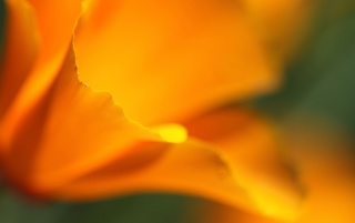 Ubuntu Yellow Flower wallpapers and stock photos