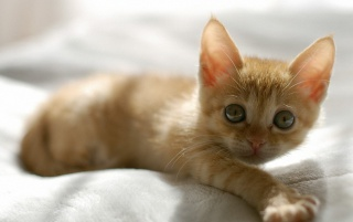 Random: Cute Orange Kitten
