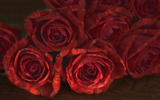 Red Roses wallpapers and stock photos