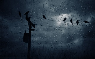 The Rain wallpapers and stock photos