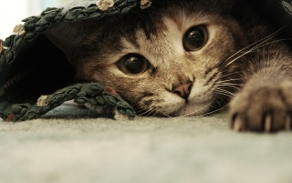 Sweet Kitten Hiding wallpapers and stock photos