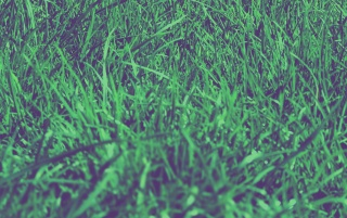 Grass Macro wallpapers and stock photos
