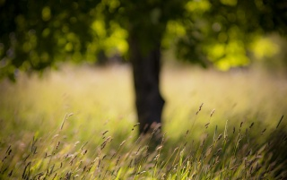 Summer Grass wallpapers and stock photos