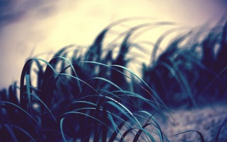 Grass Photo wallpapers and stock photos