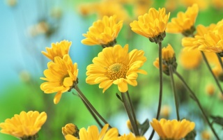 Yellow Flowers wallpapers and stock photos