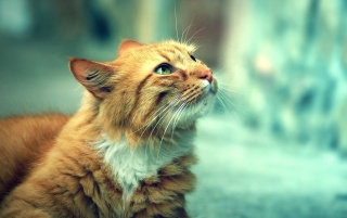Random: Cute Orange Cat
