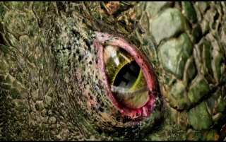 Previous: The Amazing Spider-Man Lizard Eye