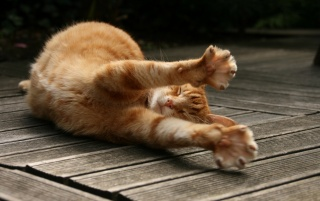 Sleepy Stretching Cat wallpapers and stock photos