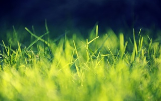 Random: Green Grass Close-up