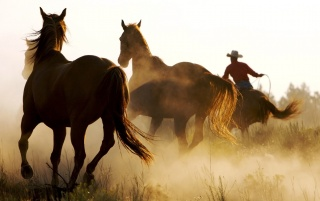 Wild Horses and Cowboy wallpapers and stock photos