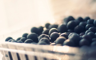 Blueberries Macro wallpapers and stock photos