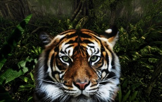 Random: Jungle Tiger