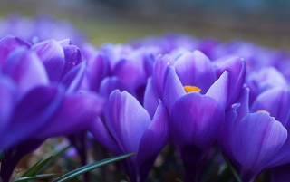 Violet Flowers Close-up wallpapers and stock photos