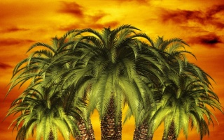 Previous: Palm Sunset
