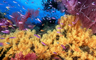 Yellow corals wallpapers and stock photos