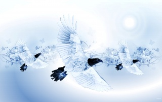 Eagle Angels wallpapers and stock photos