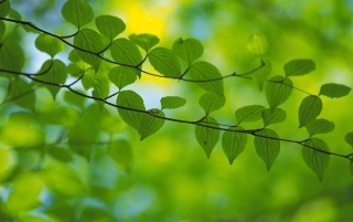 Random: Green Leaves