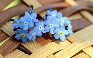 Previous: Blue Forget-me-not Flowers