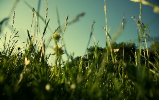 Green Grass wallpapers and stock photos