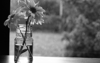 Monochrome Flowers wallpapers and stock photos