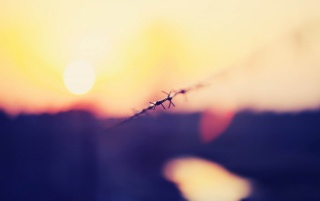 Barbed Wire Macro wallpapers and stock photos