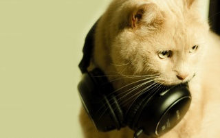 Random: Cat and Headphones