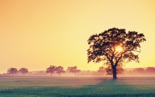 Field and Tree at Sunset wallpapers and stock photos