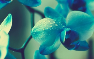 Blue Flowers wallpapers and stock photos