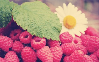 Raspberries wallpapers and stock photos