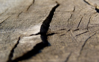Wood Macro wallpapers and stock photos