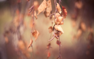 Autumn Leaves wallpapers and stock photos