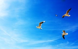 Seagulls Flying wallpapers and stock photos