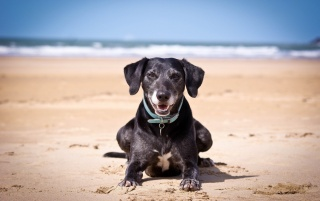 Happy Dogt by the Sea wallpapers and stock photos