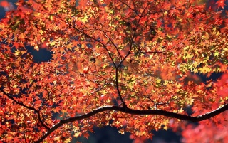 Autumn Colors wallpapers and stock photos